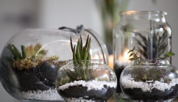 All About Terrarium